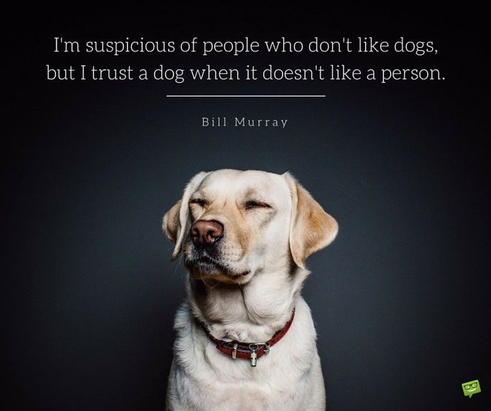 I'm suspicious of people who don't like dogs, but I trust a dog when it doesn't…