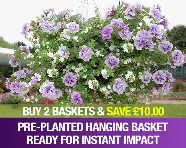Hanging Basket Plants & Container Plant Mixes | Unwins Seeds
