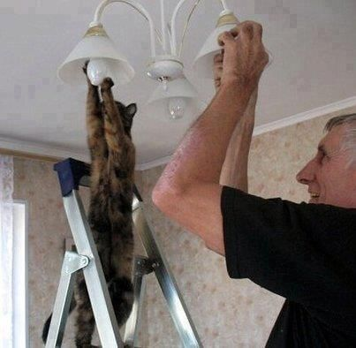Cat electrician