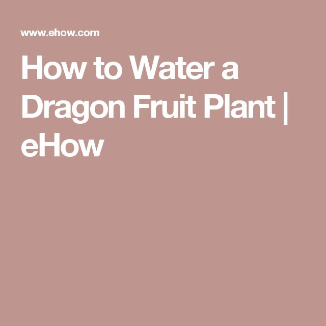 how to prepare a dragon fruit cutting for planting