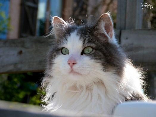 Felix on www.yummypets.com
