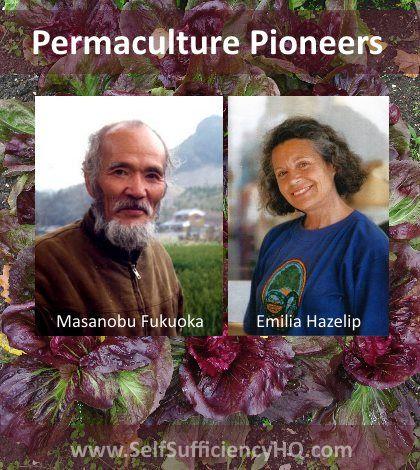 Synergistic Agriculture - Emilia Hazelip - http://www.selfsufficiencyhq.com/synergistic-agriculture-emilia-hazelip/. #Permaculture, #SynergisticAgriculture, #SynergisticAgricultureEmiliaHazelip #selfsufficiency