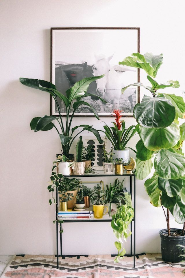 51 Awesome Indoor Plants Decor Ideas For Your Home And Apartment