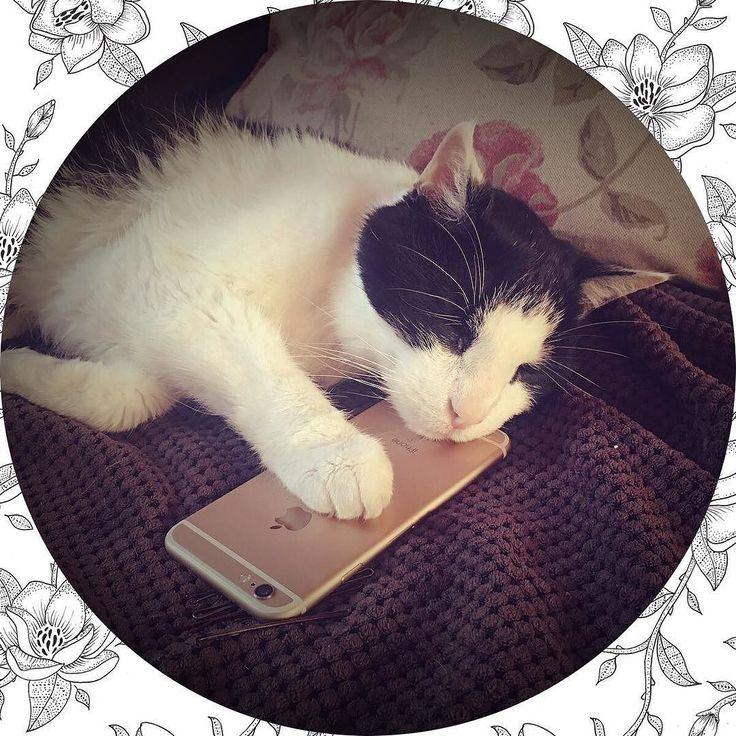 Ik meen dat ik mijn telefoon niet meer mag gebruiken...#cat #catsofinstagram #cats