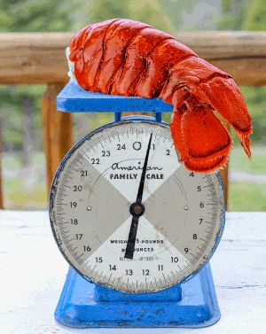 Lobster Tails Shipped. Maine Lobster Delivery. Save on fresh Maine lobsters! Get details at http://shareasale.com/r.cfm?b=227961&u=902724&m=726&urllink=&afftrack= #Fathers Day Gifts # Fathers Day #Lobsters