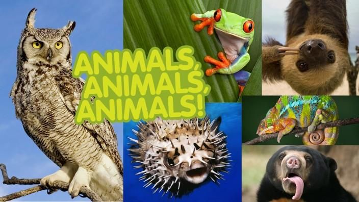 Animals: Facts, Pictures, and Videos -- National Geographic Kids