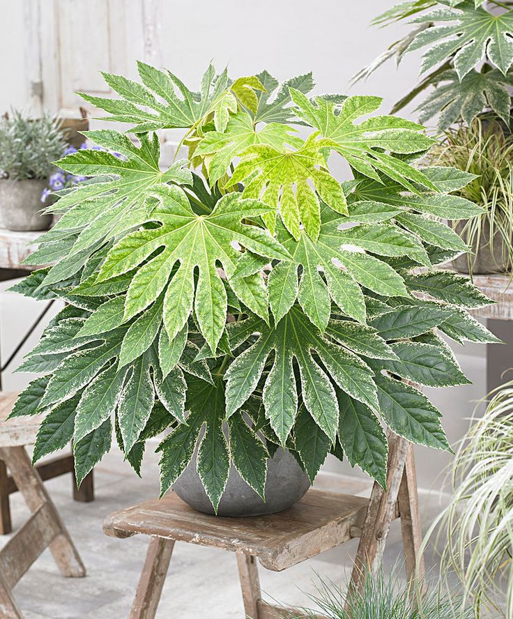 endearing house plants types. 218 best Gardening House Plants images on Pinterest  Houseplants Container garden and Ficus