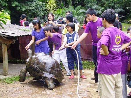 memandikan kura kura raksasa di Godongijo menjadi acara yang menyenangkan bagi para peserta