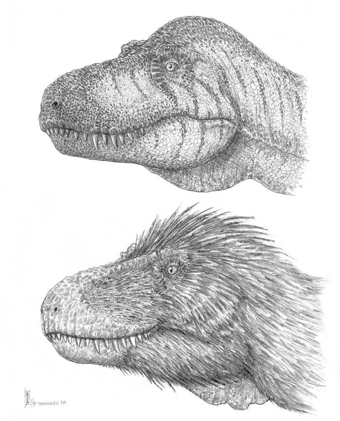 Tyrannosaurus Rex Facts - Bing Images