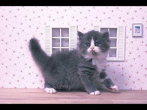 CAT : #Cute #Cat #videos of cute #kittens and #funny cat in kitten video...