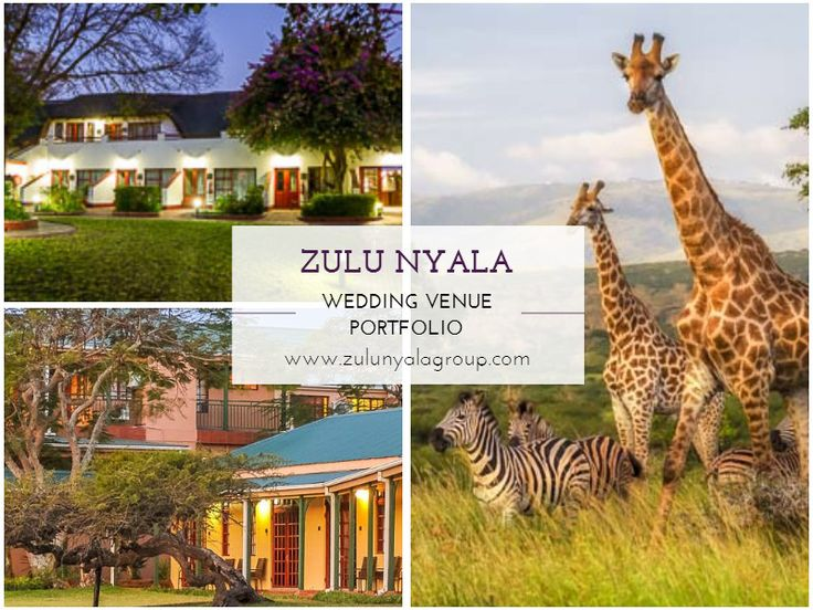 From humble beginnings as a remote 15 500 acre piece of land in the middle of KwaZulu-Natal, with a few small, basic lodges dotted around the mountain side, Zulu Nyala today is a 'gentleman's camp' developed by owner Trevor Shaw.