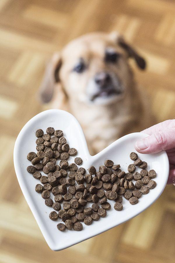 Pet Nutrition Experts Webelieveinnb Natural Balance Dog Food