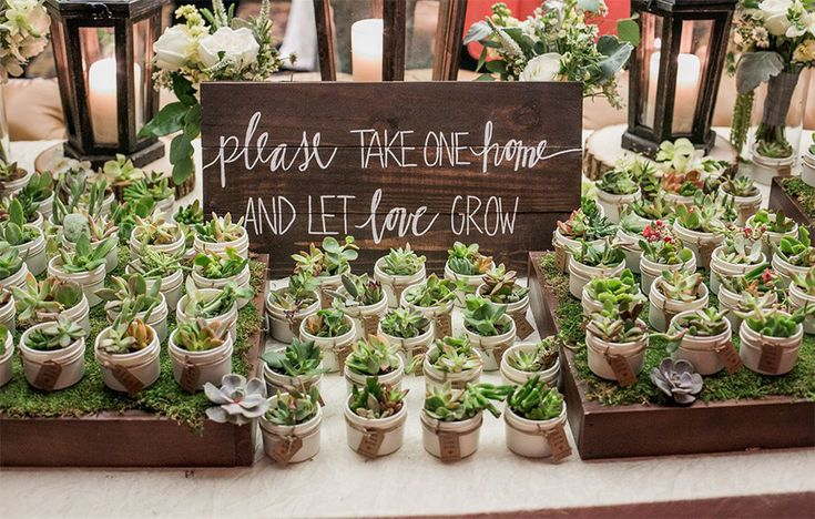 10 Ways To Use Succulents At Your Wedding – Favours | CHWV
