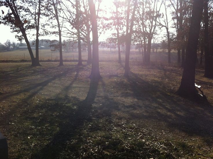 This is actually a picture of my front yard, in the morning.