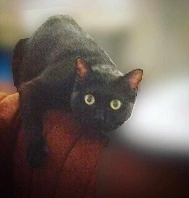 #ふと見たら #このポーズ #何してんの #何しても可愛い #黒猫 #猫 #ねこ #ねこ部 #女の子 #cat #blackcat #pet #pose #謎 #ダイヤモンドルフィー #ねこのきもち #愛猫 #フォロー返します #フォローした人全員フォローする #フォロバ100 #followmeto #f4f #フォローバック #フォロバ #followme