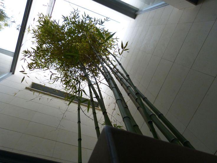 Patio ingles con ejemplar de bamb en jardinera pia - Patio ingles ...