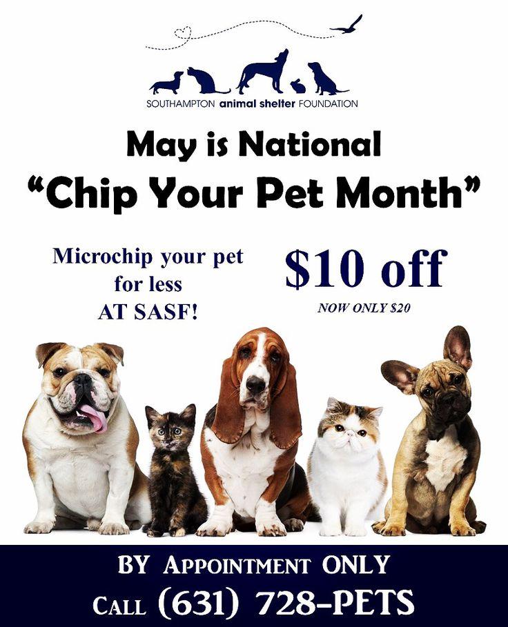National chip your pet month vet jobs pet grooming