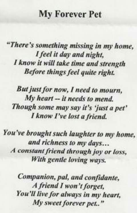 My forever pet (a poem)