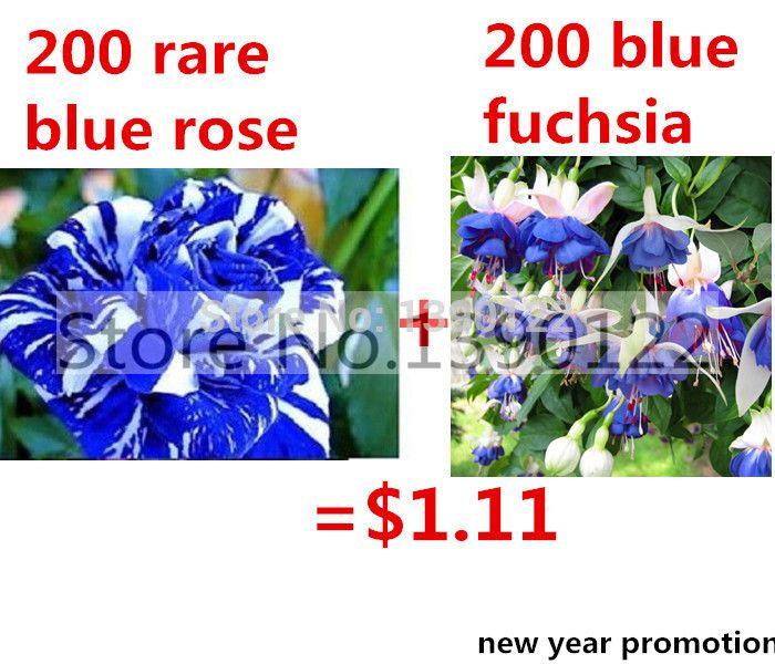 200 редкие семена голубой розы отправить 200 синий фуксия фонарь семена цветов семена цветов для DIY домашнем саду посадки