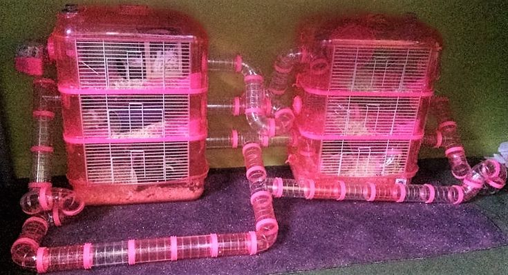 Cool Hamster Cages and Tubes Sale