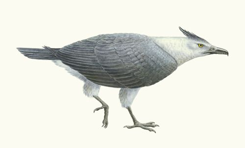 Is the teratorn (meaning 'wonderbird') the source of the thunderbird legend?  See: About Teratorns   Natural History Museum of Los Angeles