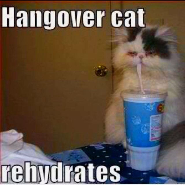 How To Rehydrate A Cat At Home