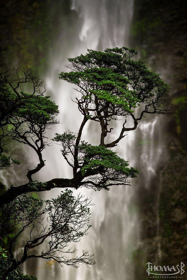 Devils Punchbowl Waterfall, Arthur's Pass National Park, New Zealand