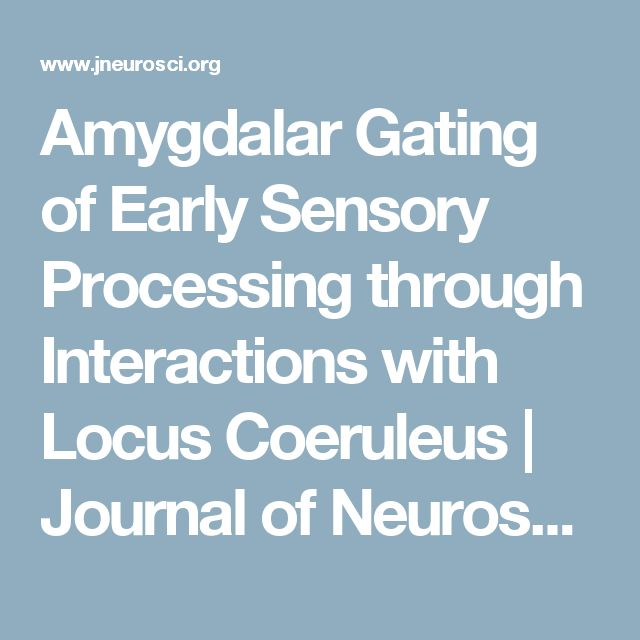 Amygdalar Gating of Early Sensory Processing through Interactions with Locus Coeruleus | Journal of Neuroscience