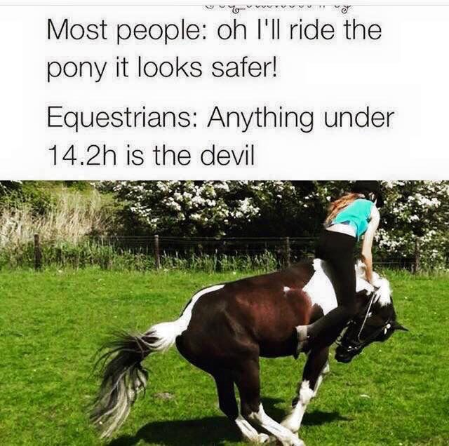 Most people: Oh I'll ride the pony it looks safer! Equestrians: Anything under 14.2hh is the devil!