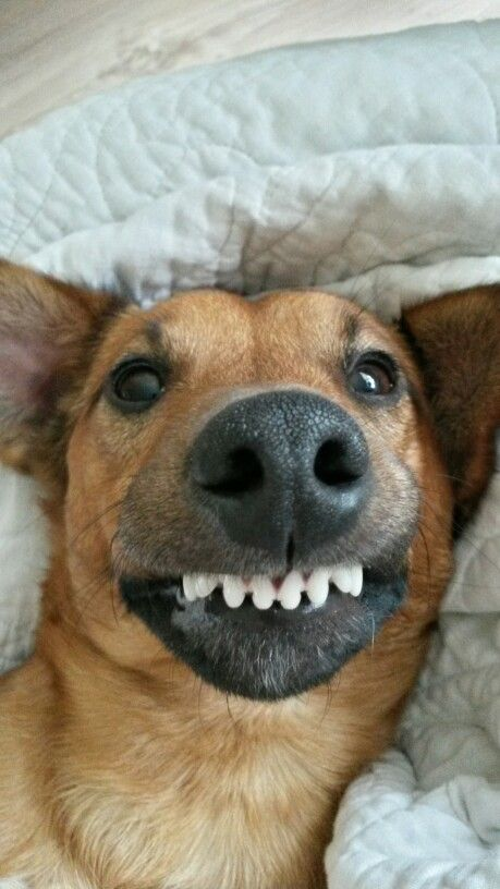 Dog And Cat Smiling With Teeth