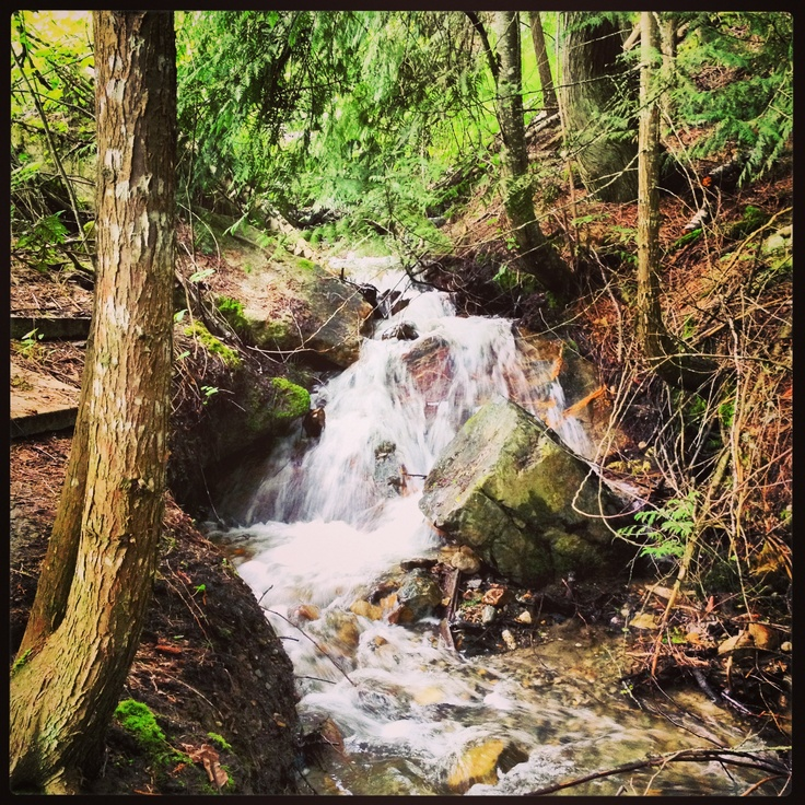In the scared forest near our house in Salmon Arm, British Columbia. Follow our adventures at www.facebook.com/brightsideyoga