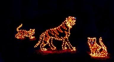 Celebrate the Holidays at the National Zoo with ZooLights / 2016 Dates and Times November 25-January 1 Closed Dec. 24, 25 and 31 Hours: 5-9 p.m. Held Rain or Shine