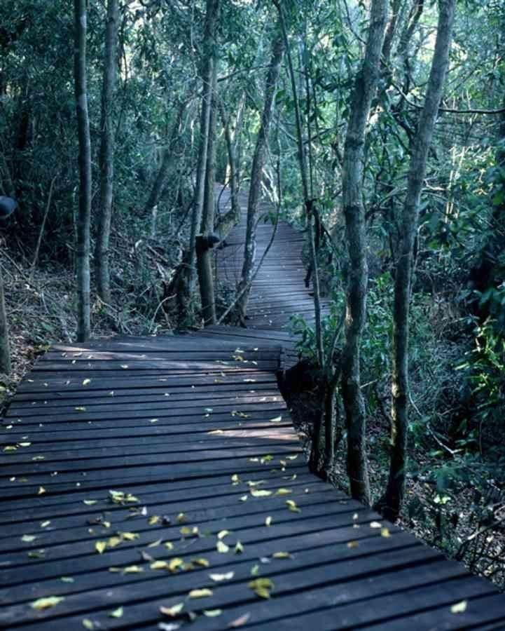 Forest walks - Knysna