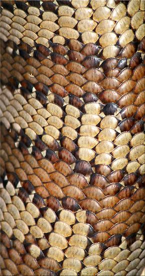 lizard skin. brown  (I hate reptiles but as a pattern, this is stunning.)