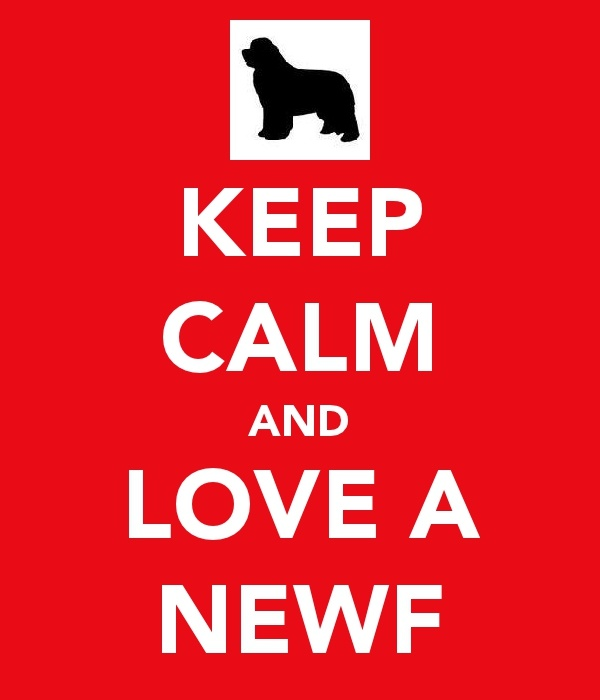 Newfie love Yay I can finally post this!!! I just got my Newfie last night!