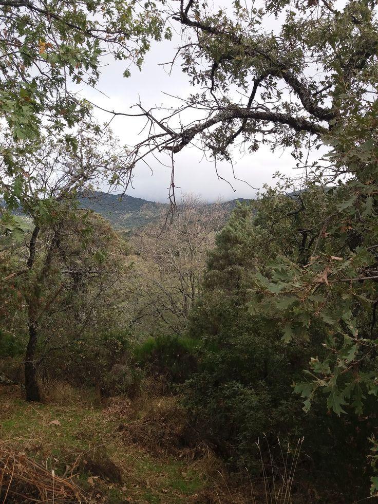 Sierra de San Vicente (Toledo) - Árboles de otoño (1)