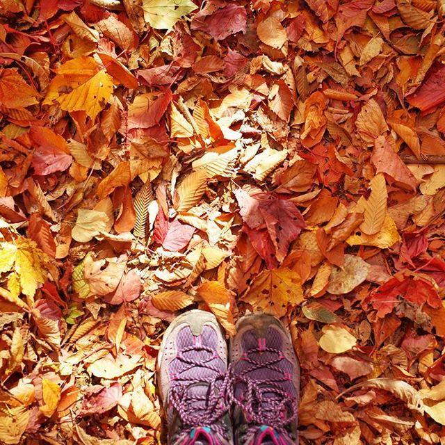 【sae130】さんのInstagramをピンしています。 《#思い出pic  #日向山 #山梨県 #北杜市 #尾白川 #尾白川渓谷 #登山 #山歩き #outdoor  #outdoorlife #外遊び #nature #自然 #自然に感謝  赤、黄、茶色落ち葉の絨毯〜🍁🍂 * サクサク パリパリいい音、いい香りで フッカフカ〜😳🍂🍁 * 癒されます😘🍁 #columbia #ricohgr2 #ricohgr #GR2 #gr #カメラ女子 #山ガール #秋 #紅葉 #紅葉狩り#autumn🍁  #落ち葉の絨毯 #森  #happy》