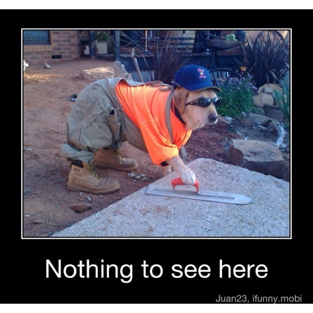 Little construction worker!!: Work Hard, Idea, Funny Dogs, Funny Pictures, Dogs Costumes, Pet, Funny Stuff, Funny Animal, Work Dogs