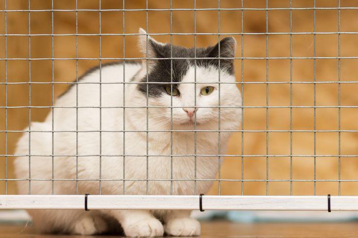 #catenclosures