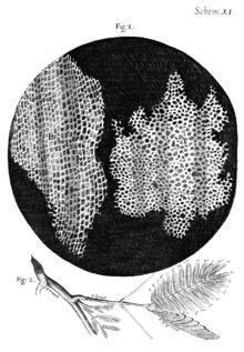 Cellule (biologie) — Wikipédia. La cellule — du latin cellula «cellule de moine» — est l'unité biologique structurelle et fonctionnelle fondamentale de tous les êtres vivants connus. C'est la plus petite unité vivante capable de se reproduire de façon autonome. La science qui étudie les cellules est appelée biologie cellulaire. La plupart des cellules des plantes et des animaux ne sont visibles qu'au microscope, avec un diamètre compris entre 10 et 100µm.