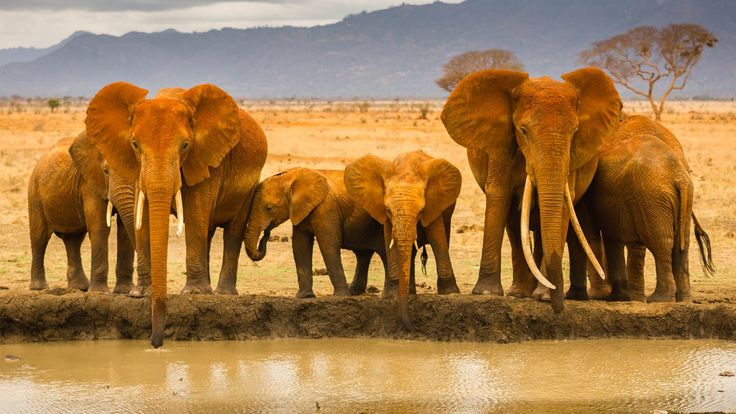 The Fight For The Ivory