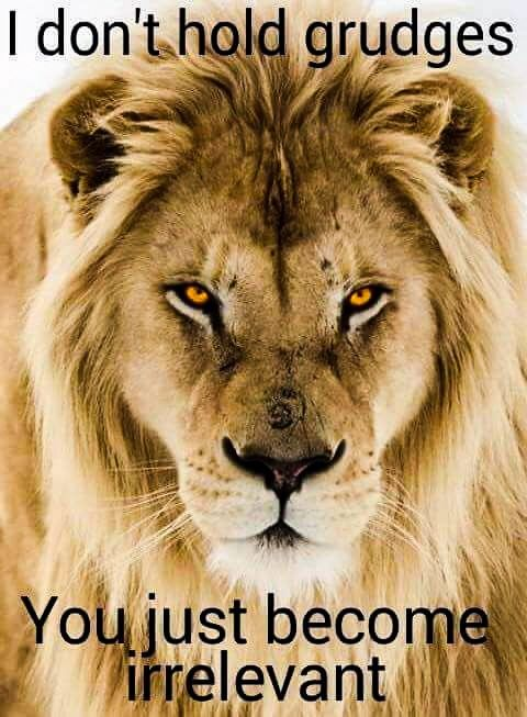 Dont Trust Quotes Wallpapers 36 Best My Beautiful Lions Images On Pinterest Lion
