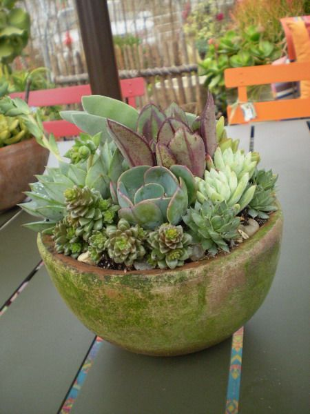 Indoor & Outdoor Succulent gardens.  Great look, easy to care for and you can put it outside come summer