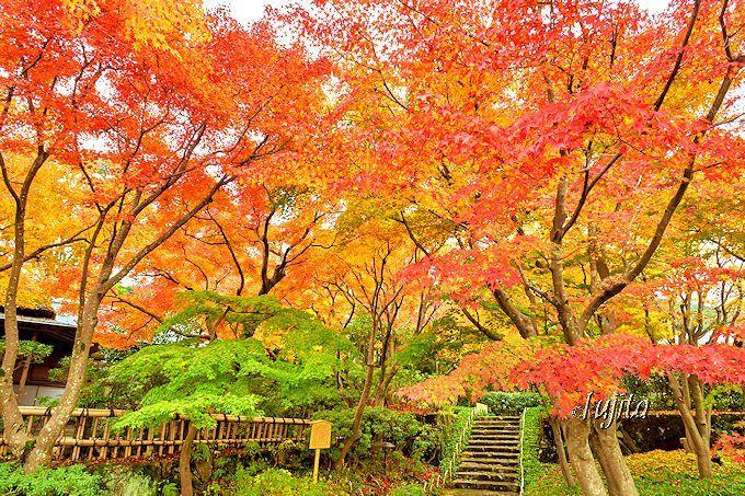 著名な紅葉名所「箱根美術館」の本館、MOA美術館「茶の庭」の #紅葉 が11月14日から無料公開されます!  #写真 #花 #花写真 #静岡 #伊豆 http://guide.travel.co.jp/article/13439/