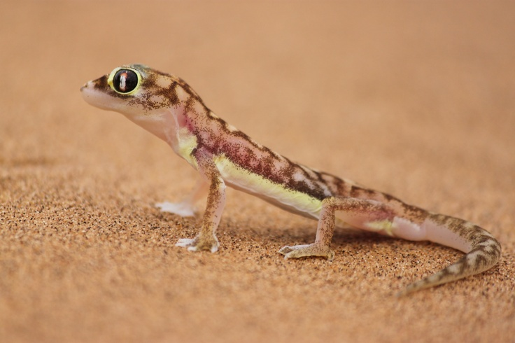 The Namib Desert is home to resilient creatures both great and small.