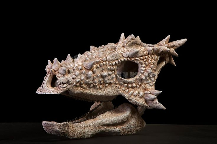 Dracorex hogwartsia (Bakker et al., 2006)  Described as a new genus but, after further research (Horner JR and Goodwin, M.B., 2009), it is currently considered a juvenile Pachycephalosaurus.