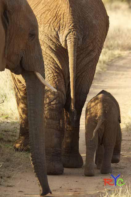 Wildlife photography courses in Laikipia, Samburu, Amboseli and Tsavo National Park, Kenya.