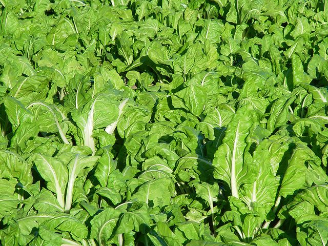 5 cultivos fáciles para empezar un huerto en casa.