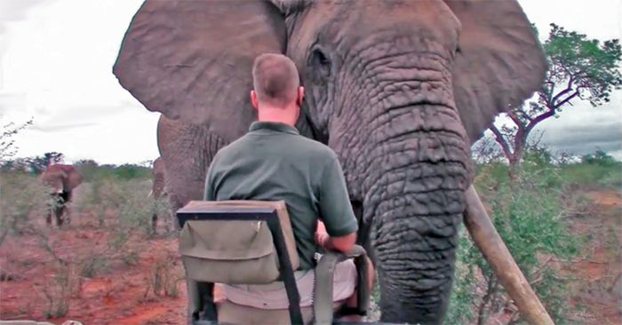 Video: A close encounter with a big tusker - Africa Geographic
