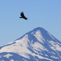 Volcan Llaima, with a condor.